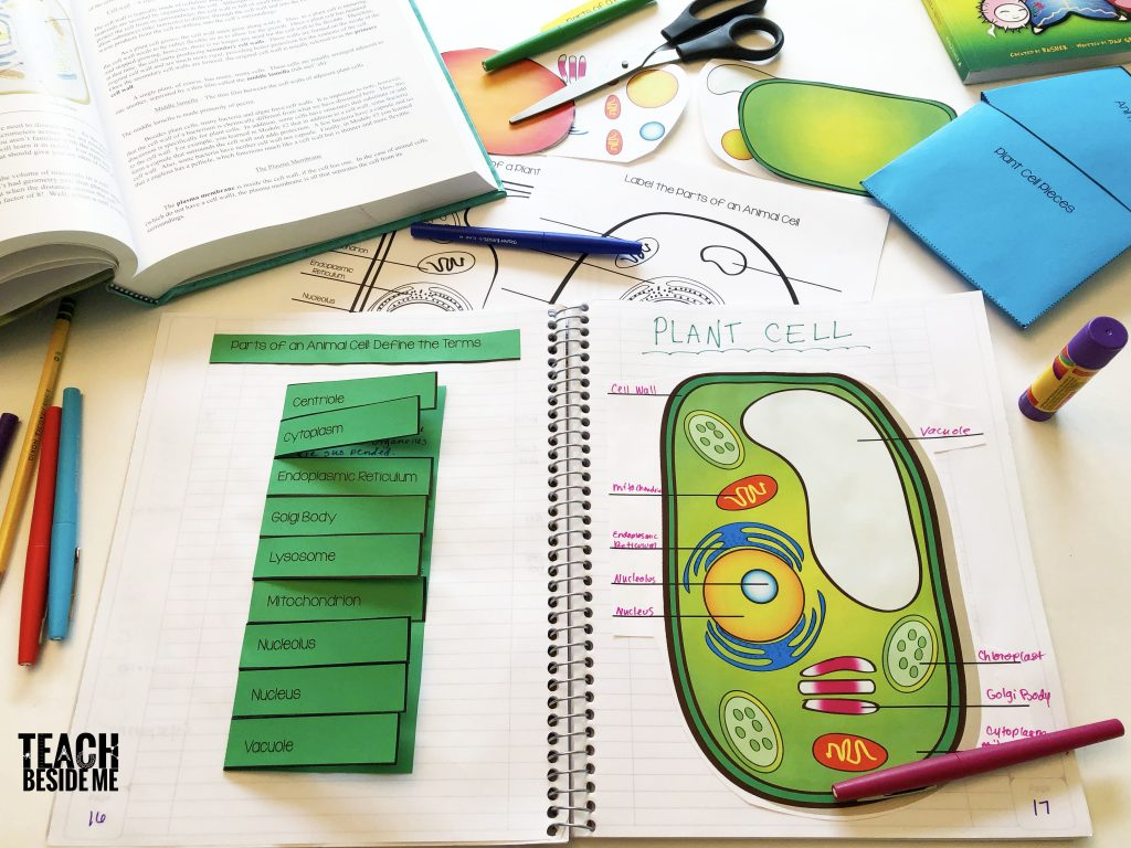 biology plant cell diagram interactive notetaking