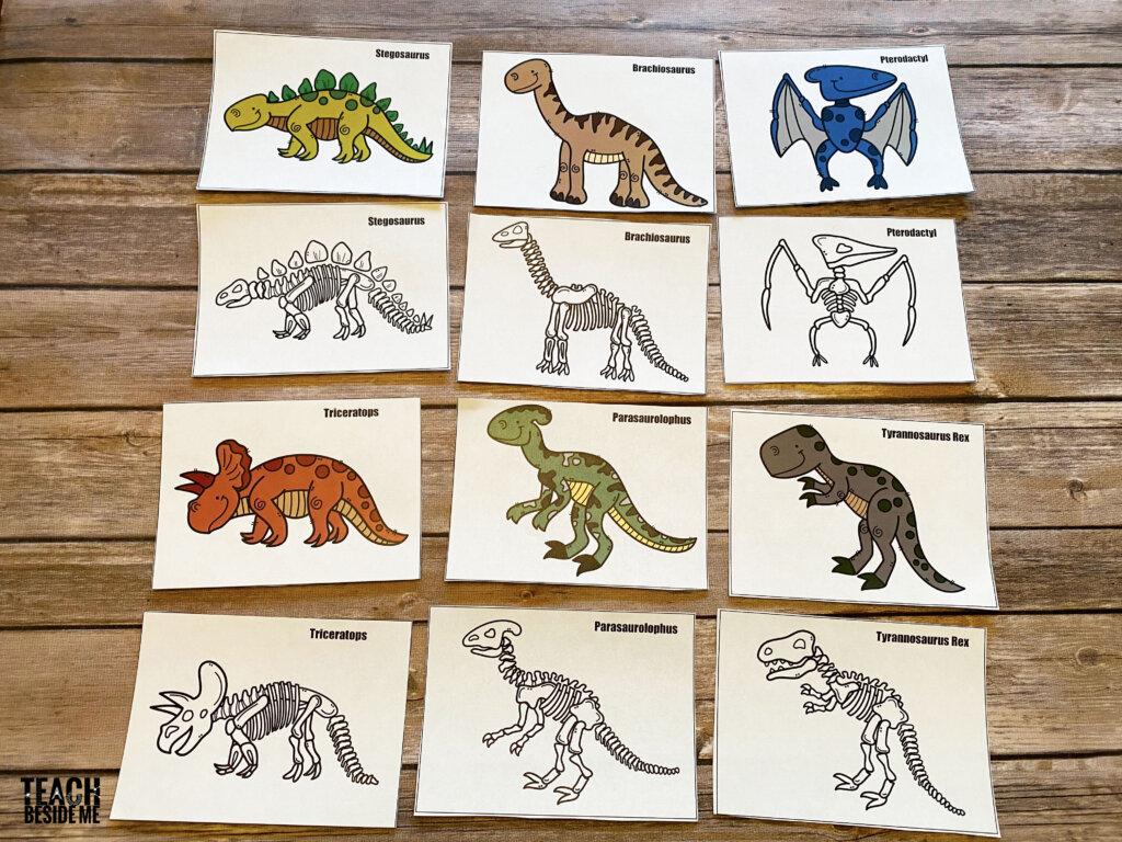 dinosaur fossil matching xrays