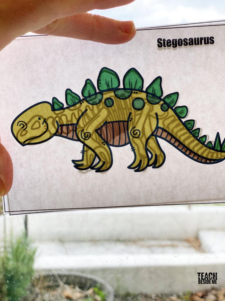 dinosaur xrays stegosaurus