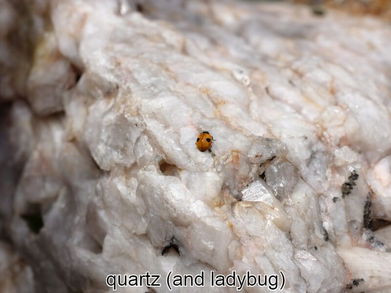 quartz with ladybug